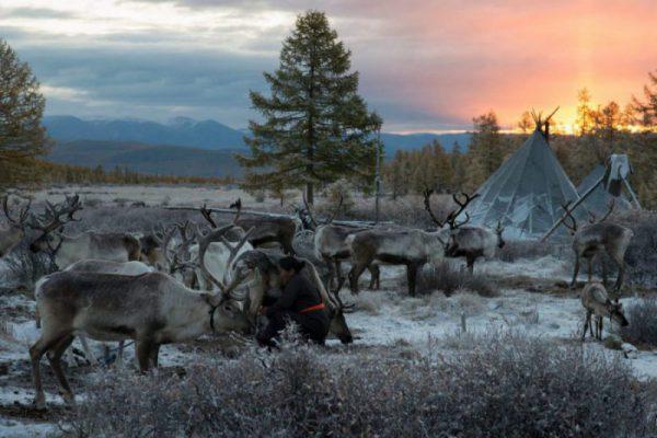 Reindeer Tour Mongolia
